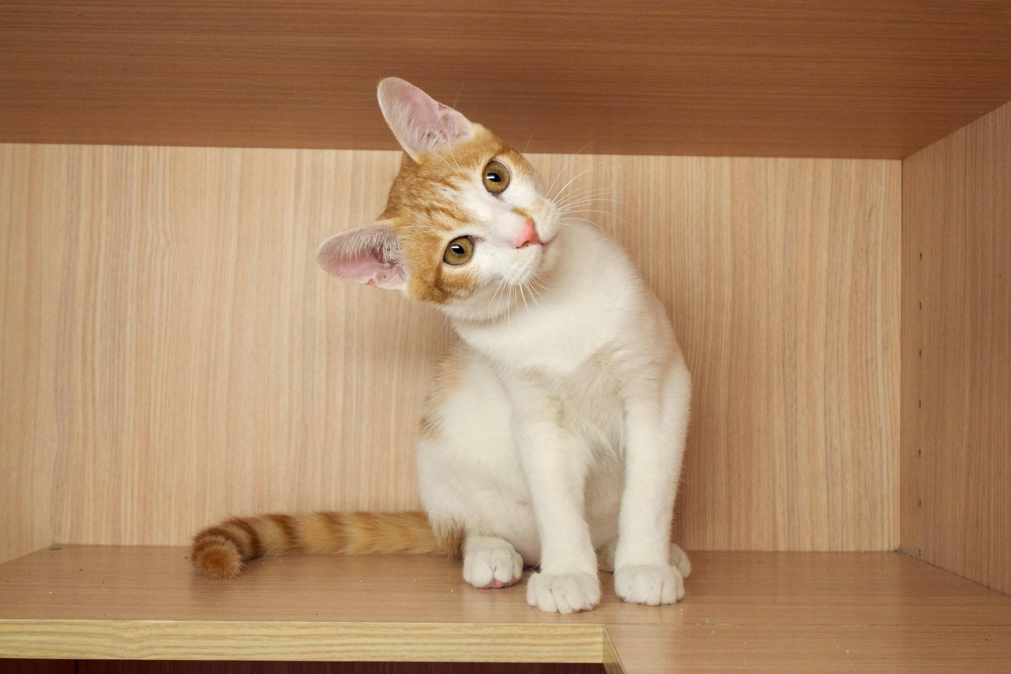 帅气猫图片大全可爱