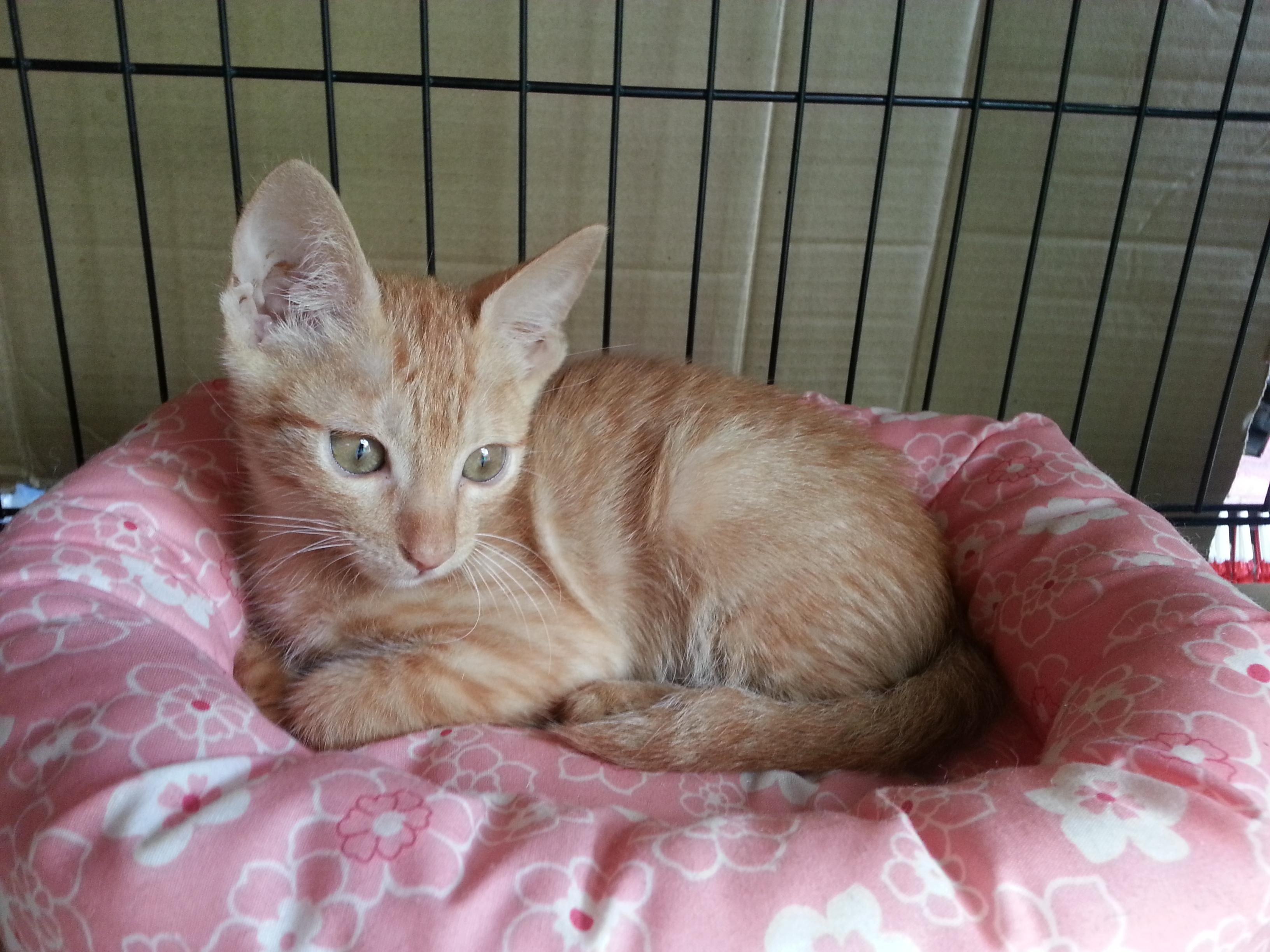 认养相本-- 可爱小橘猫免费认养 -- 台北市支持流浪猫