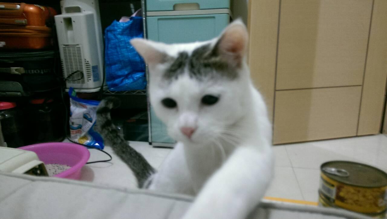 可爱的女孩子名字 带猫