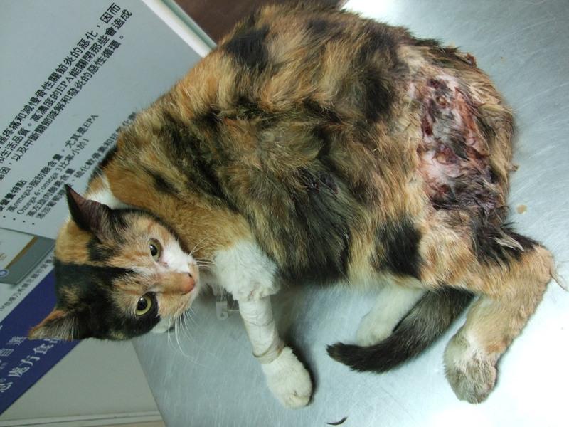 流浪动物医助-- 已扎车祸往生浪猫 -- 台北市支持流浪
