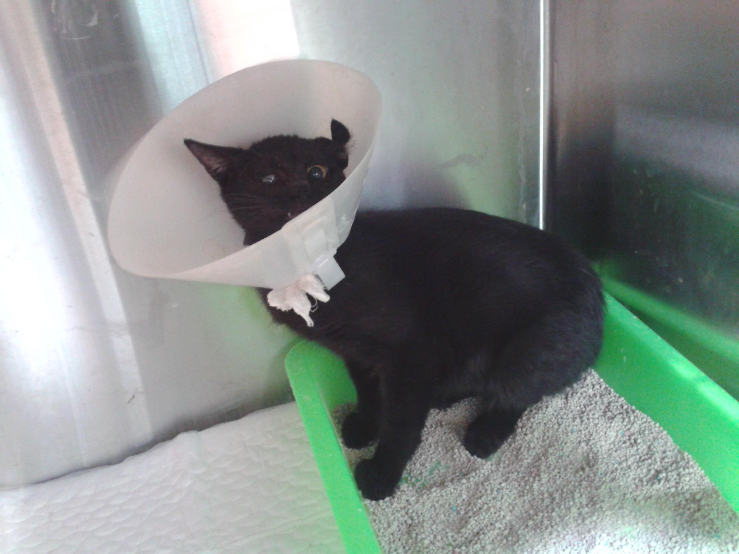 流浪动物医助-- 眼睛受伤的小黑猫 -- 台北市支持流浪