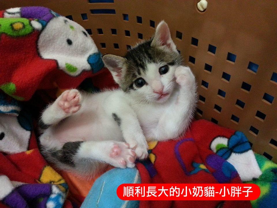 壁纸 动物 狗 狗狗 猫 猫咪 小猫 桌面 960_720