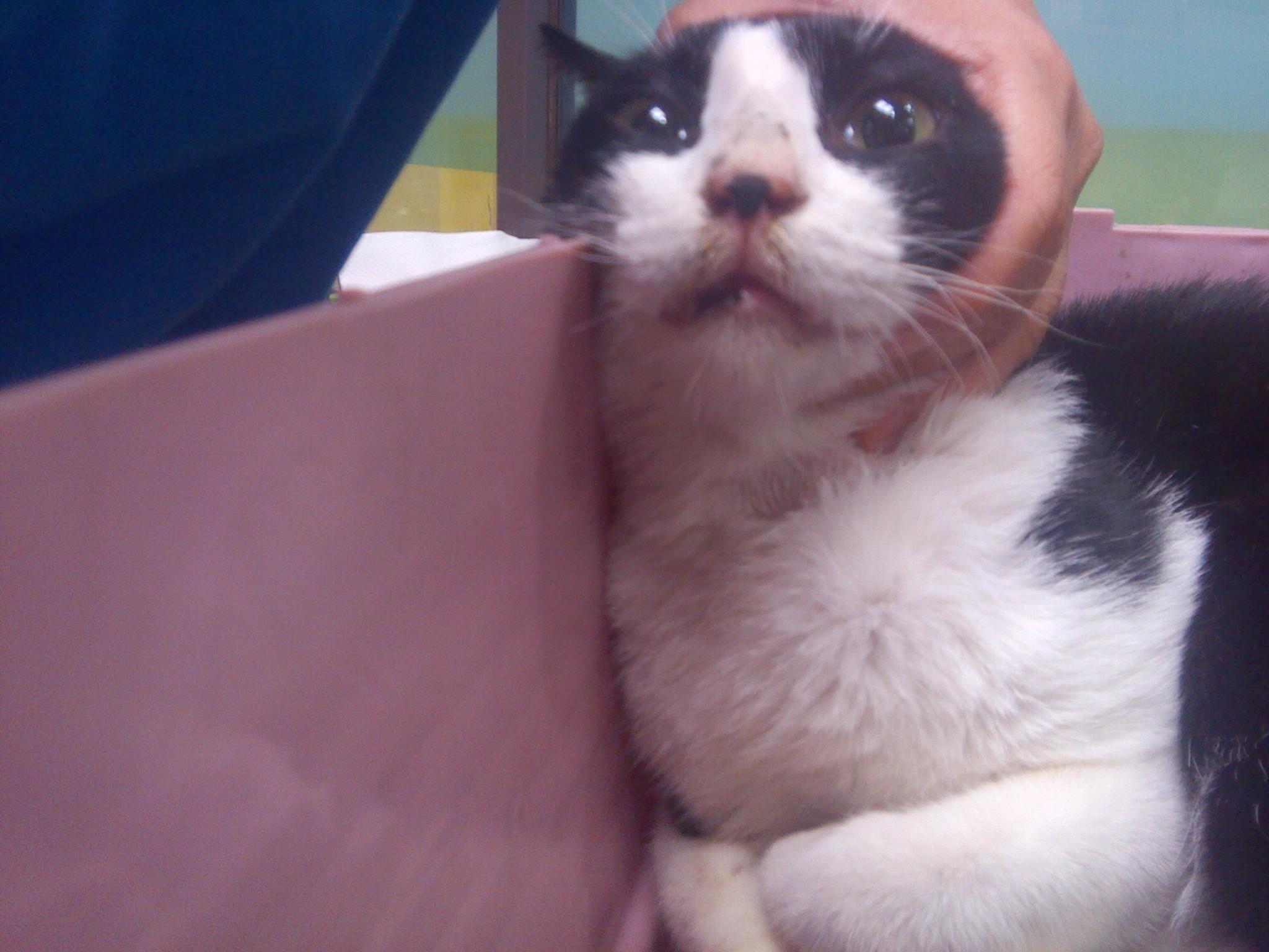 医助-- 流口水的宾士猫@台北市支持流浪猫绝育(tnr)图片