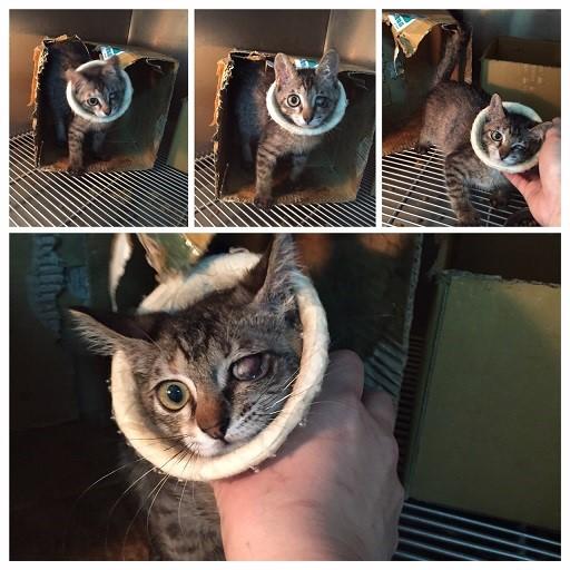 动物病情说明:              在市场餵猫时,新出现的3只小猫,有妈妈