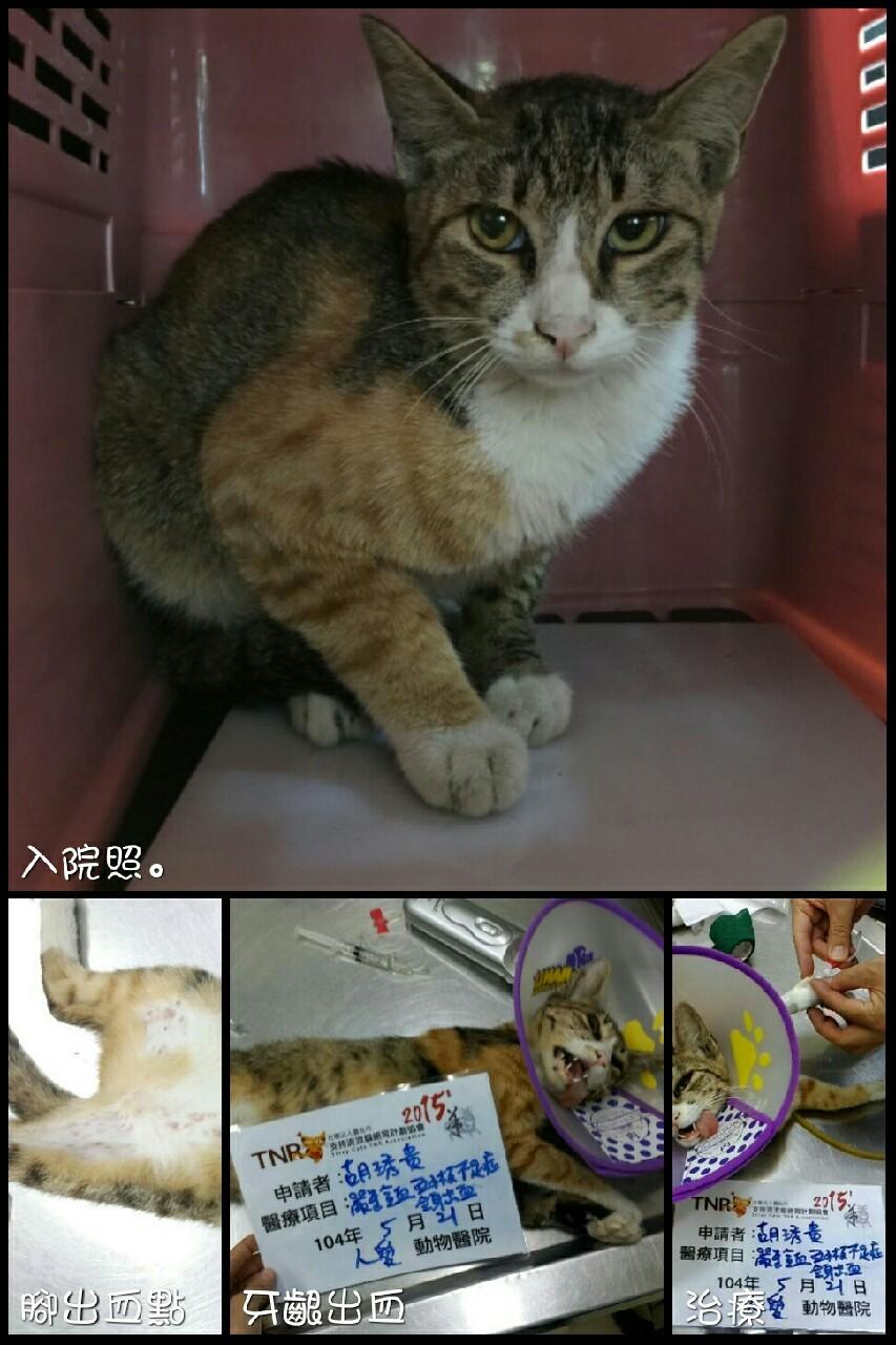 壁纸 动物 猫 猫咪 小猫 桌面 853_1280 竖版 竖屏 手机