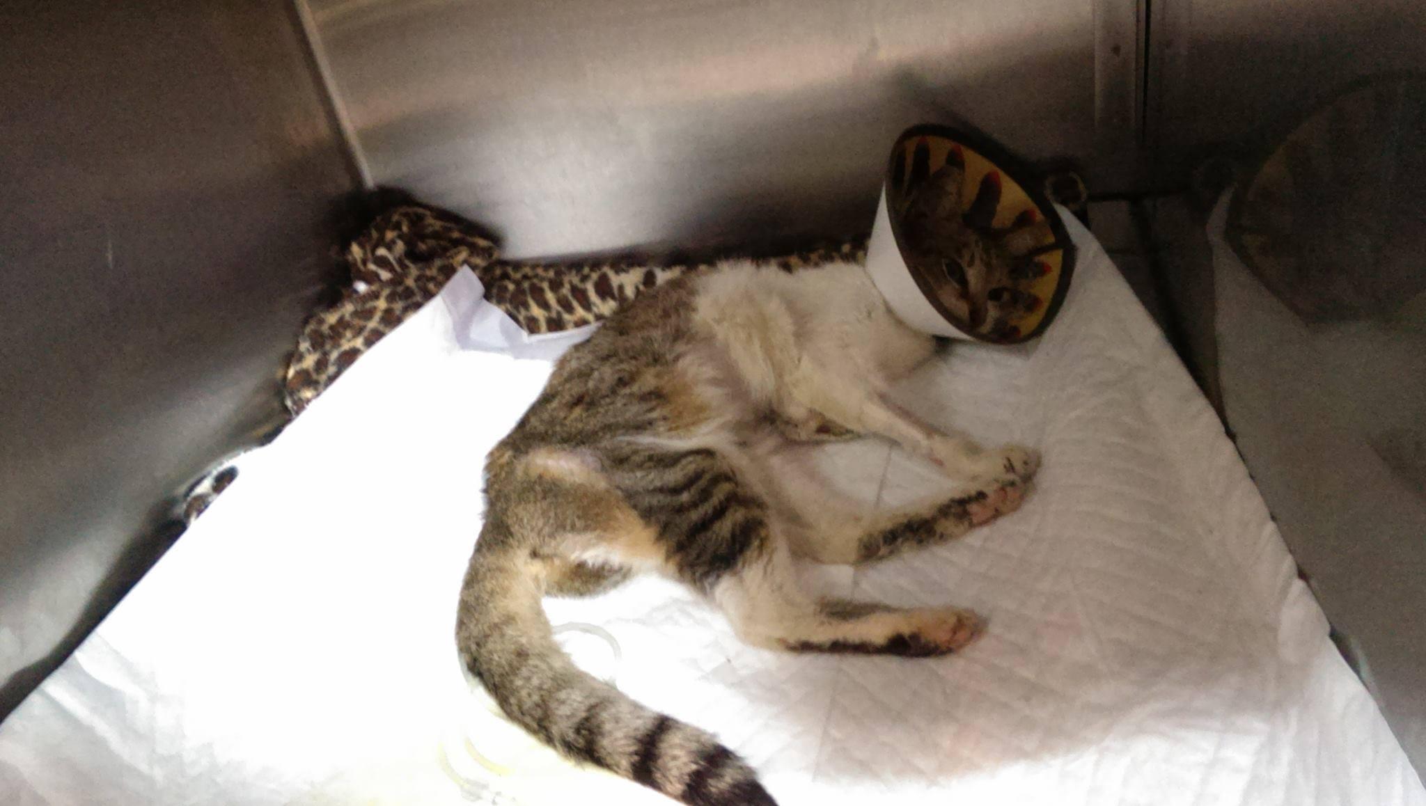 壁纸 动物 猫 猫咪 小猫 桌面 2048_1158