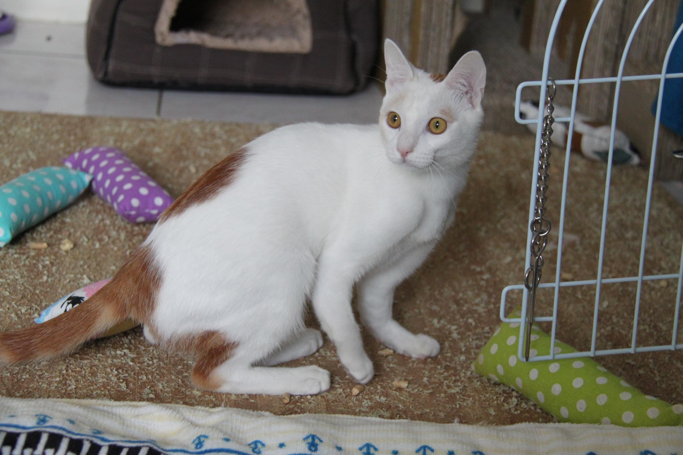 壁纸 动物 猫 猫咪 兔子 小猫 桌面 2352_1568