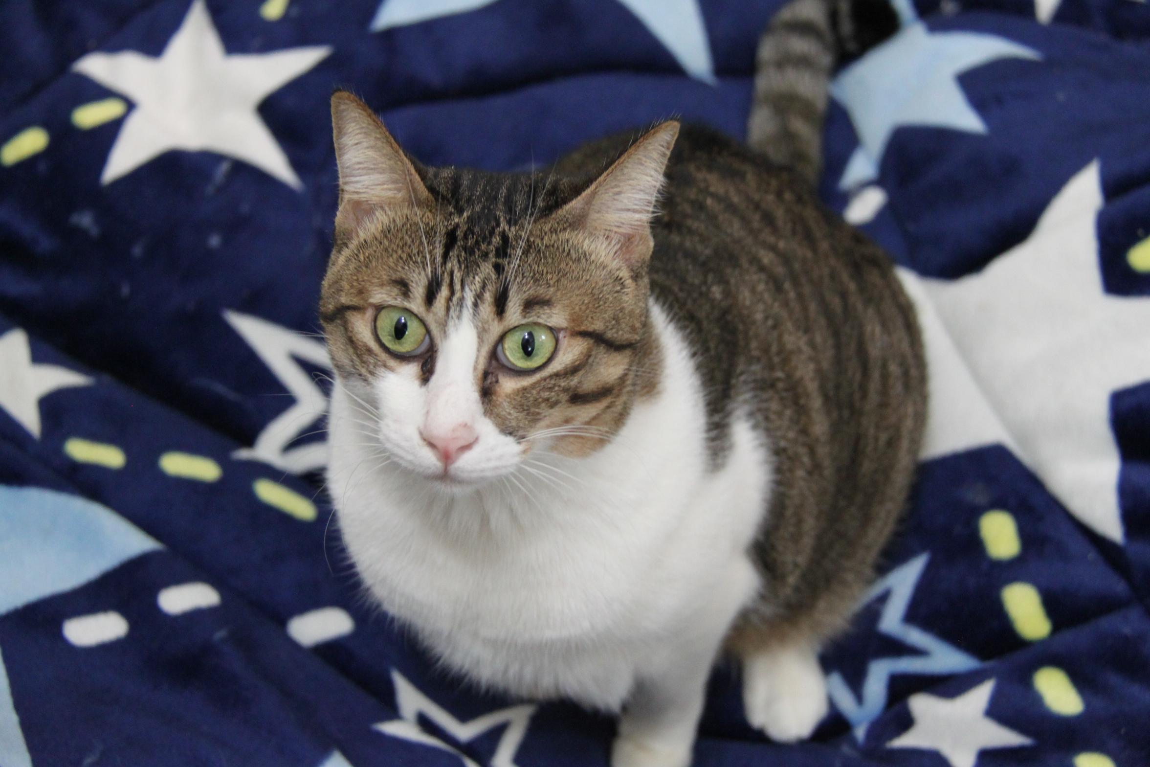 (201702)   coco是阳台房里最亲人且最乖巧的猫咪,个性跟玻璃房的乖