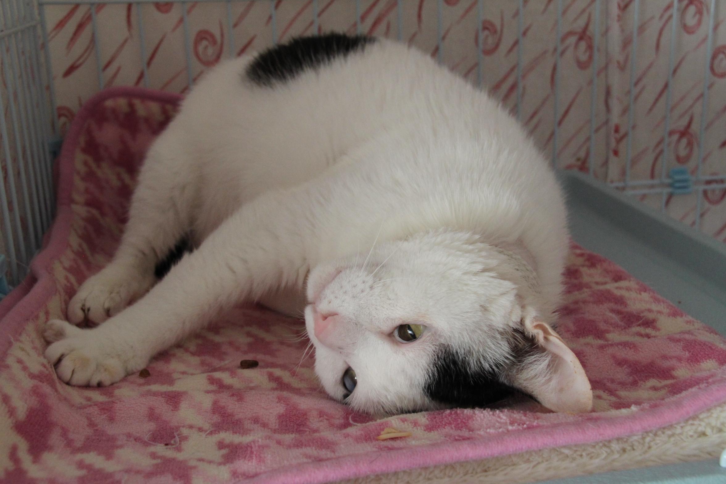 阿良,大福,橡皮擦,拐拐,抱抱   关於线上观看动态:   我们把几只猫咪
